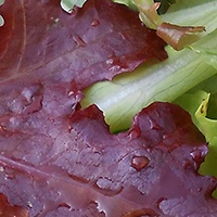 Légumes automne ferme de Malaguet
