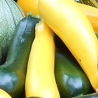 Légumes été ferme de Malaguet