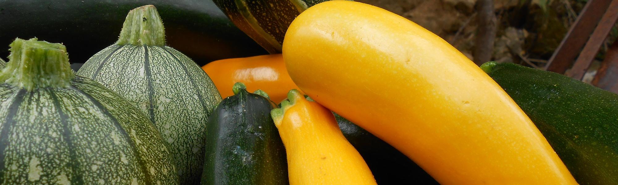 Légumes bio Poitiers