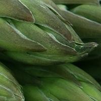 Légumes printemps ferme de Malaguet