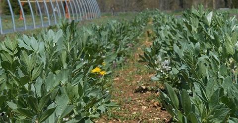 Légumes et plants maraîchers biologiques